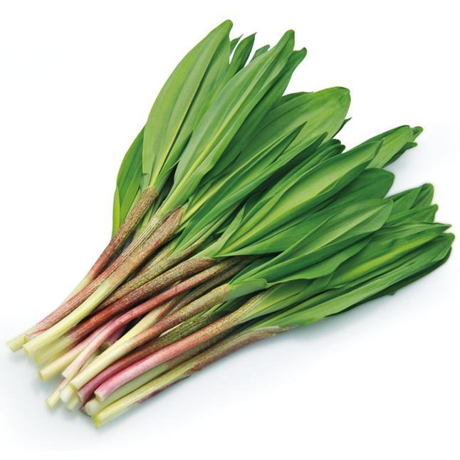 にんにく 行者 春と言えば山菜!北海道で行者にんにくを採りにいこう!